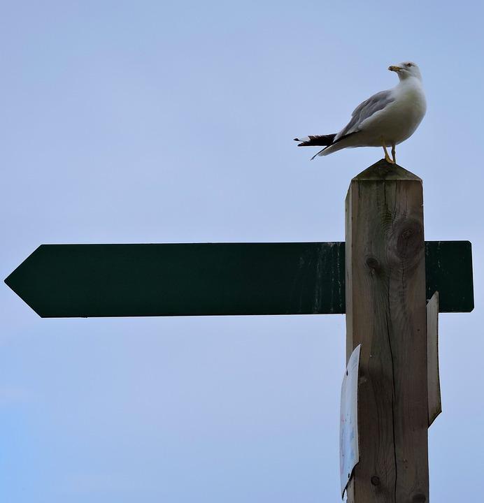 Bird, Sky, Seagulls, Outdoors, Daylight, Wildlife