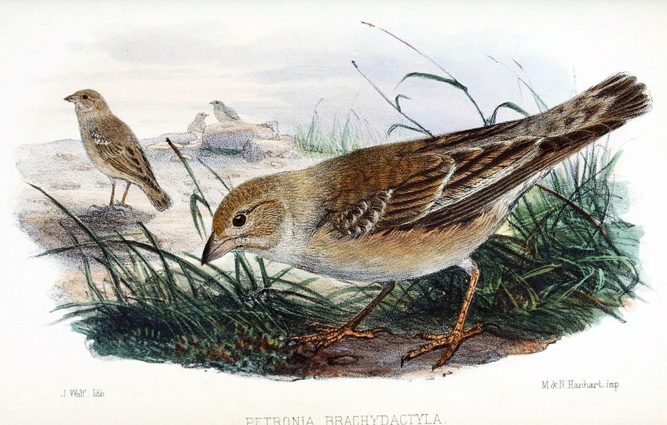 Brown Thrasher, Bird, Wildlife, Outdoors, Songbird