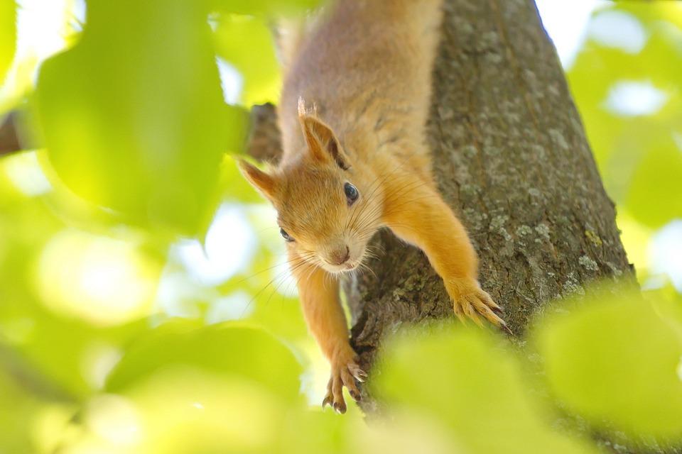 Squirrel, Nature, Wildlife, Tree, Animal, Little