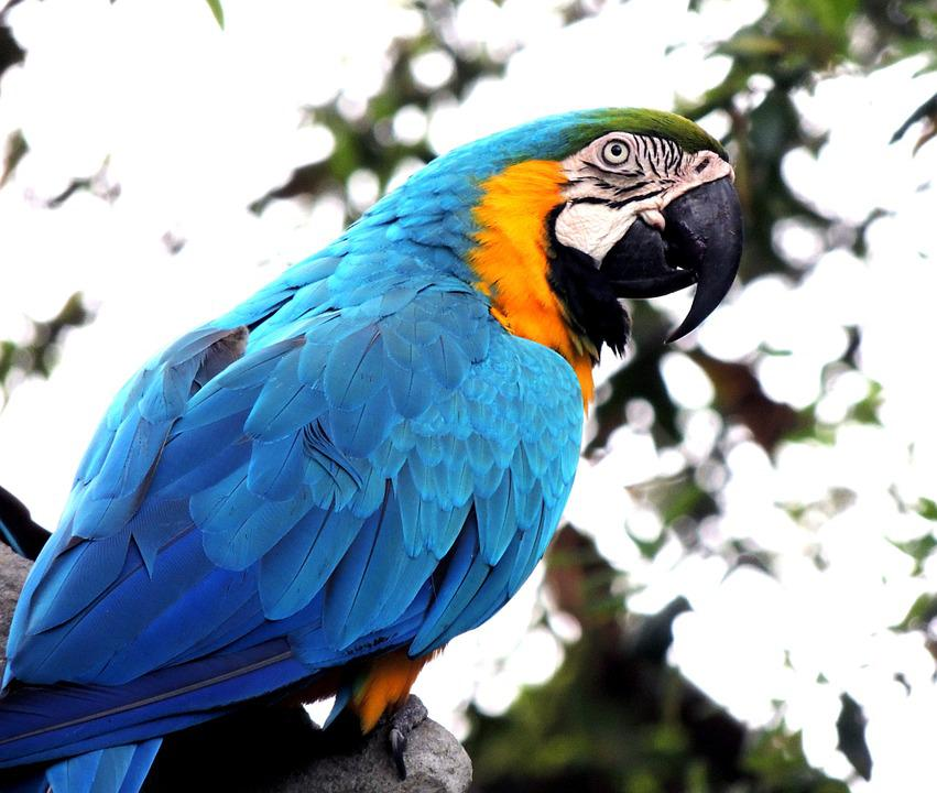 Macaw, Parrot, Bird, Pet, Wildlife, Tropical, Colorful