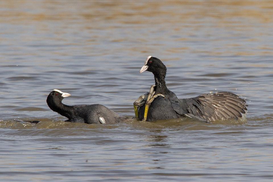 Birds, Wildlife, Body Of Water, No Person, Water Birds