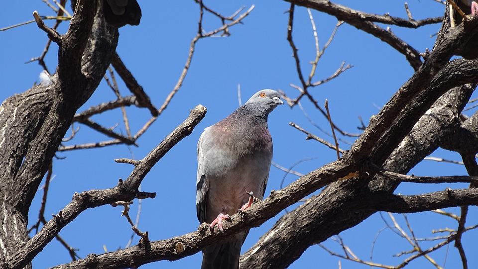 Nature, Wood, New, Wildlife, Animal, Pigeon