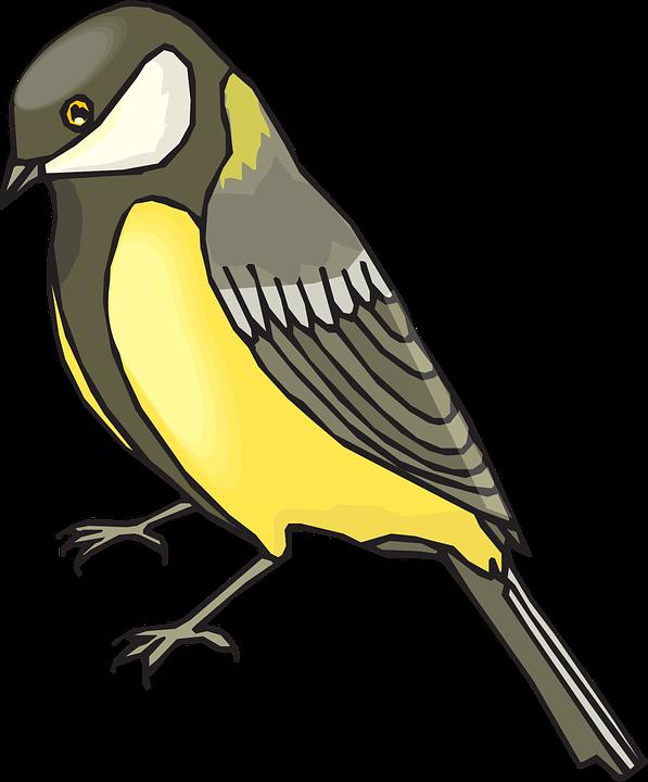 Goldfinch, Bird, Wildlife, Golden, Yellow, Brown, Grey