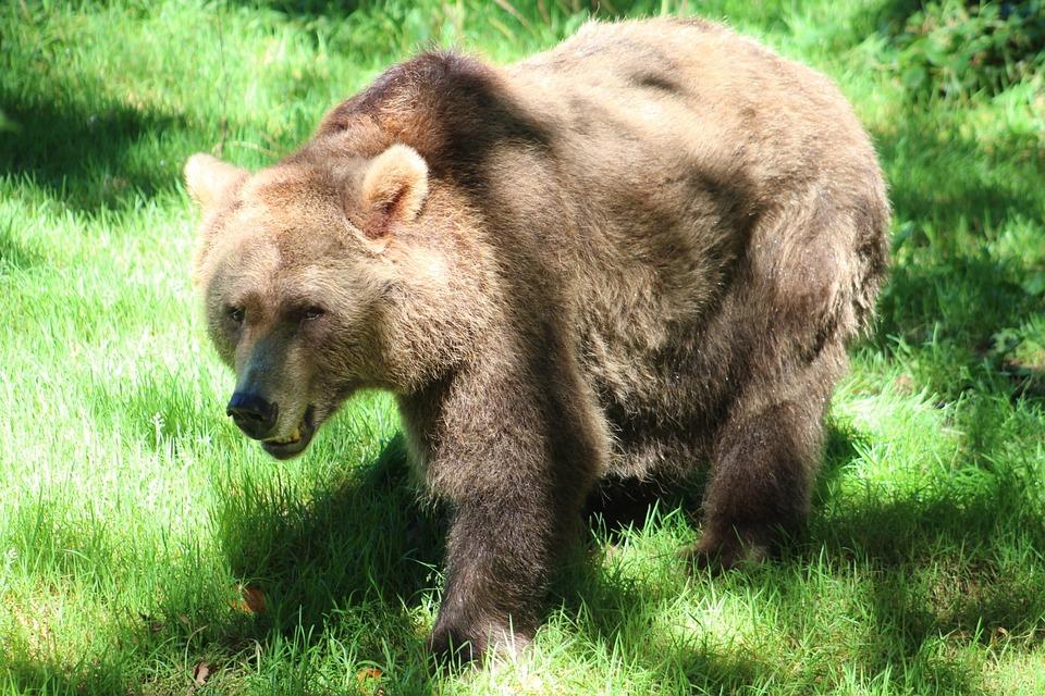 Bear, Zoo, Wildlife, Nature
