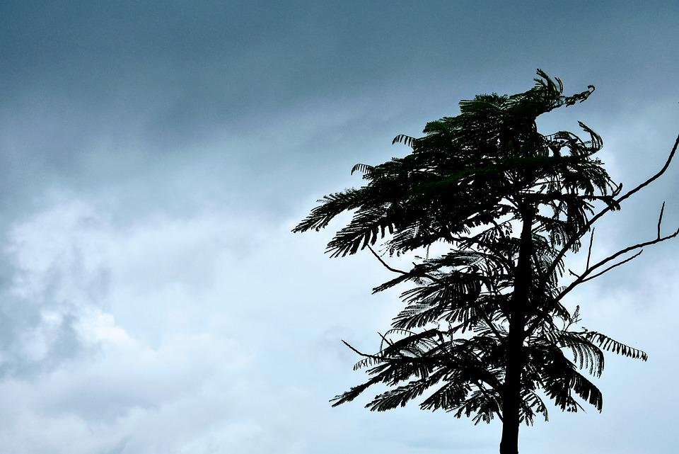 Wind, Clouds, Weather, Sky, Tree, Windy Fall, Landscape