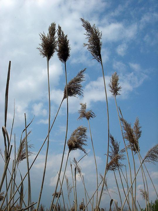 High, Dry Grass, Sky, Wind, Movement