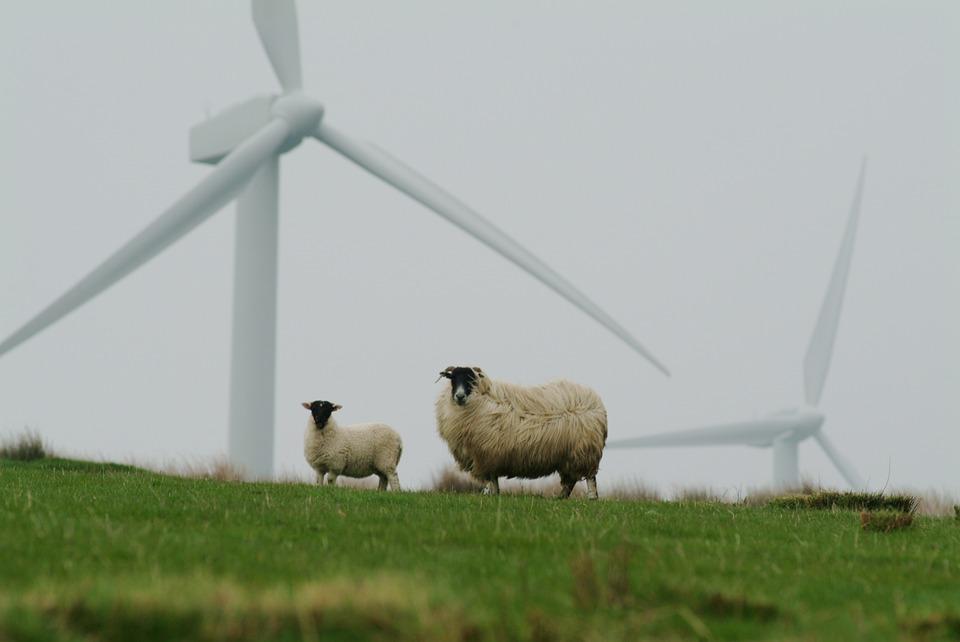 Sheep, Wool, Couple, Wind Mills, Mills, Pasture, Wind