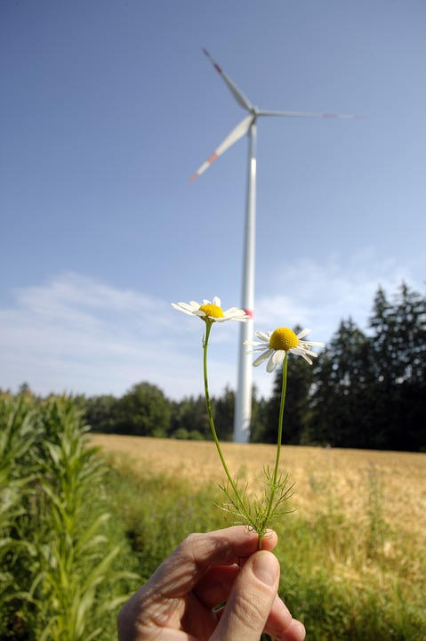 Environmental Protection, Wind Power, Wind Energy