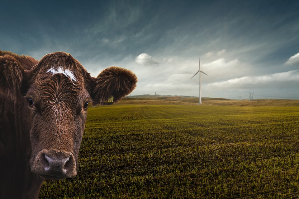 Renewable Energy, Wind Power, Climate Change, Nature