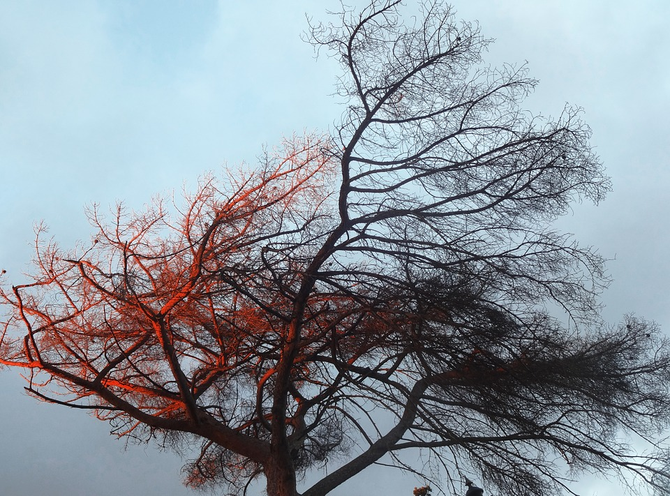 Tree, Light, Gradient, Color, Sky, Fall, Wind, Picture