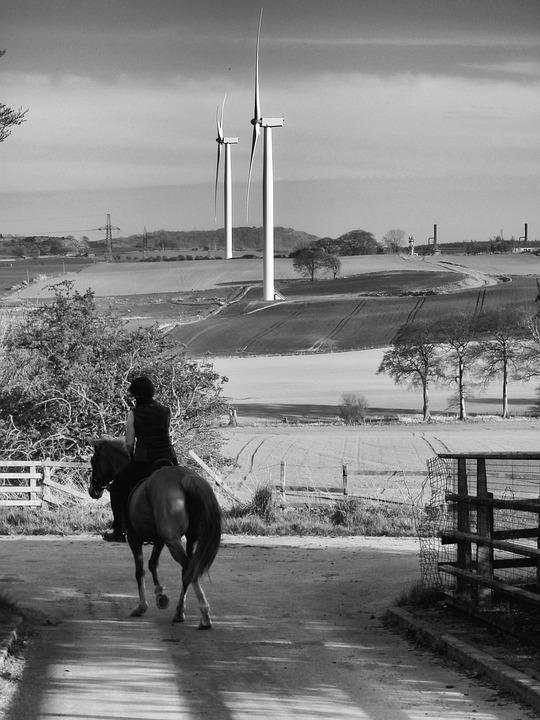 Wind Turbine, Horse, Landscape, Black White