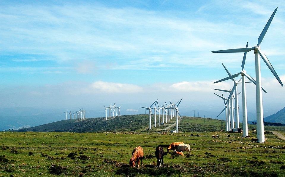 Galicia, Windmills, Cows, Prado, Landscape, Pastures