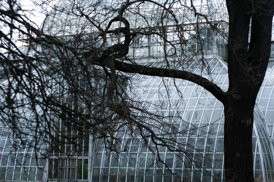 Tree, Botanical Garden, Structure, Window, Greenhouse