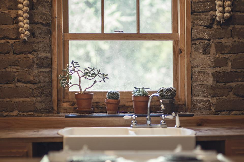 Garlic, Cactus, Window, Nature, Green, Food, House