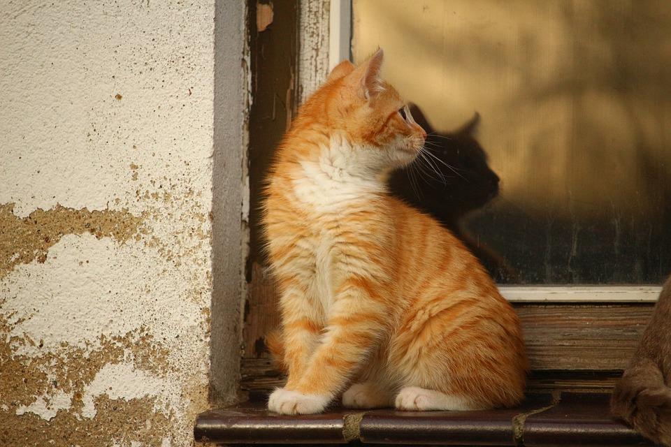 Cat, Mirroring, Window, Kitten, Cat Baby, Mieze