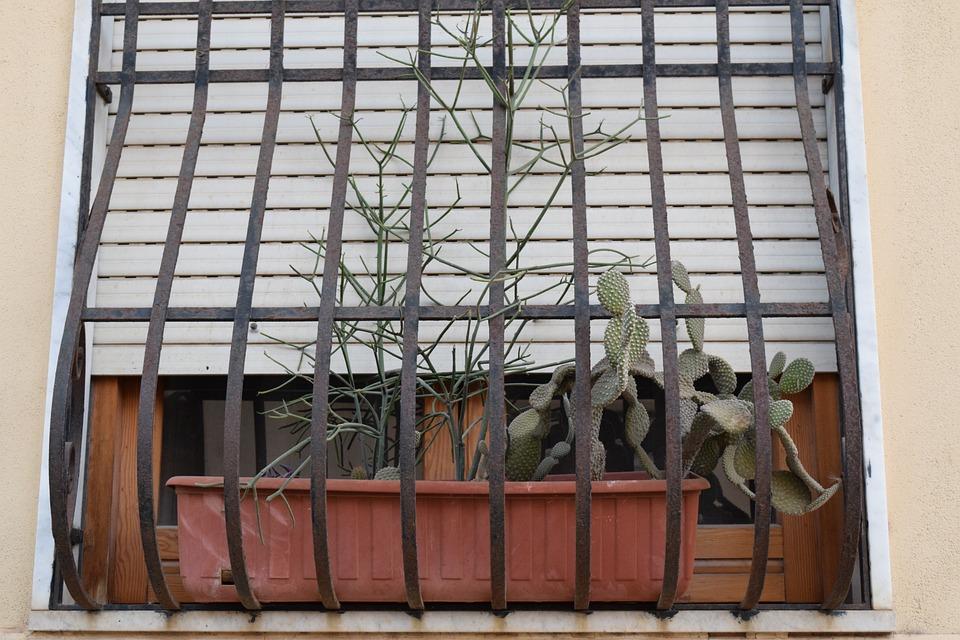 Window, Window Decorations, Flower Box, Cactus, Grid