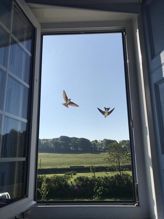 House Martin, Window, Sky, Scotland, Fields, Farmland