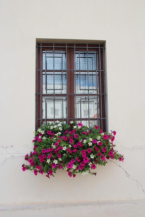 Window, Flower Box, Decoration, Flowers
