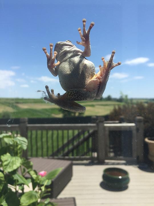 Frog, Green, Outside, Window, Glass
