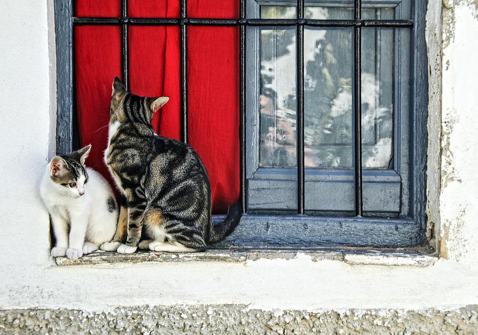 Cat, Two Cats, Window, Grill, Fur, Together, Feline