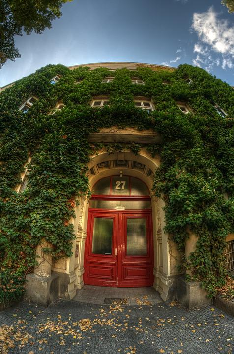 House, Berlin, Architecture, Ivy, Red, Door, Window