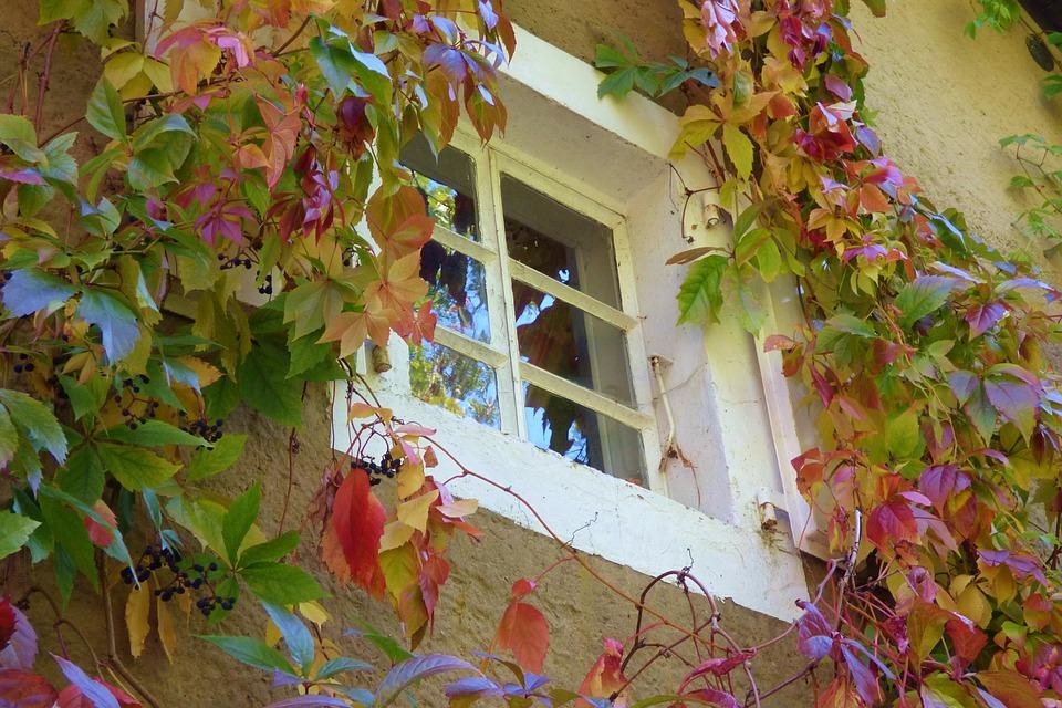 Window, Leaves, Overgrown, Fall Colors, Autumn, Season