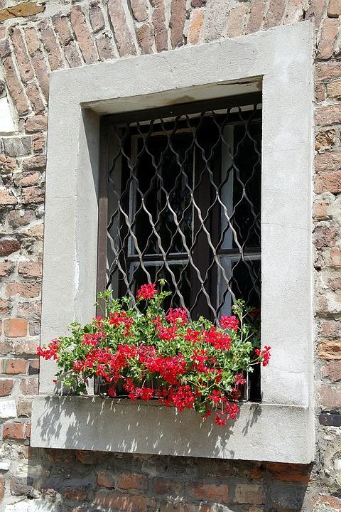Window, Trellis, Geraniums, Flowers, Wall, Decorative
