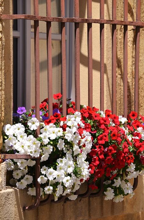 Flower, Windows, Railing