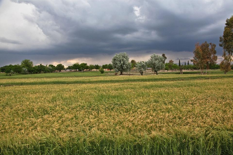 Storm, Wind, Windstorm, Fields, Nature