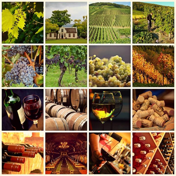 Wine, Winegrowing, Vines, Grapes, Vineyard, Wine Glass
