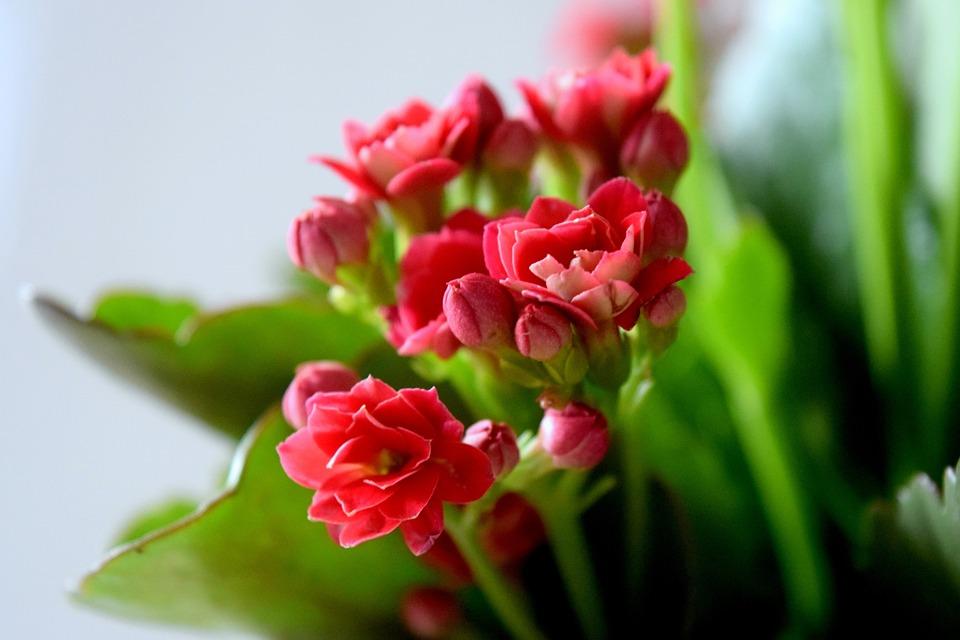 Flower, Red, Wine, Nature, Arrangement, Green, Bokeh