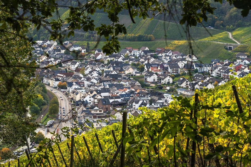 Wine, Vines, Vineyard, Winegrowing, Vine, Agriculture