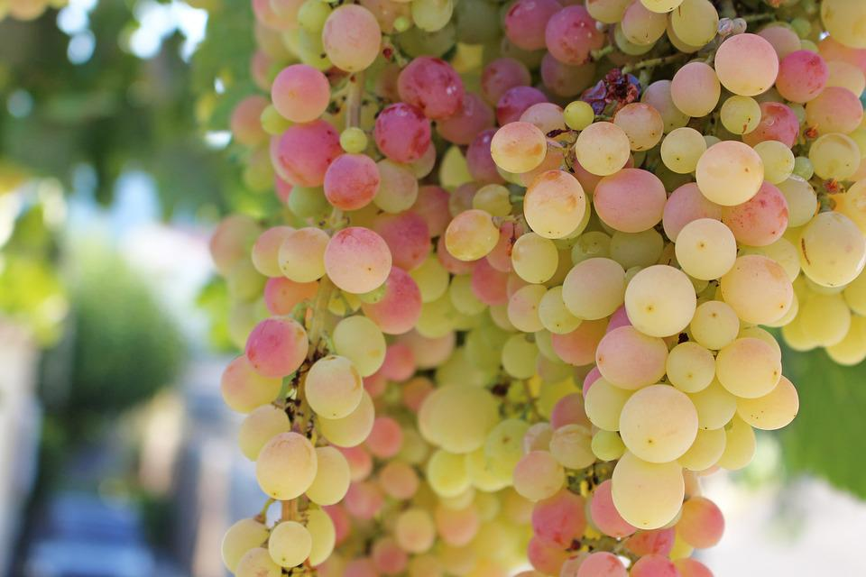 Grapes, Fruit, Vine, Winegrowing, Grapevine, Sweet