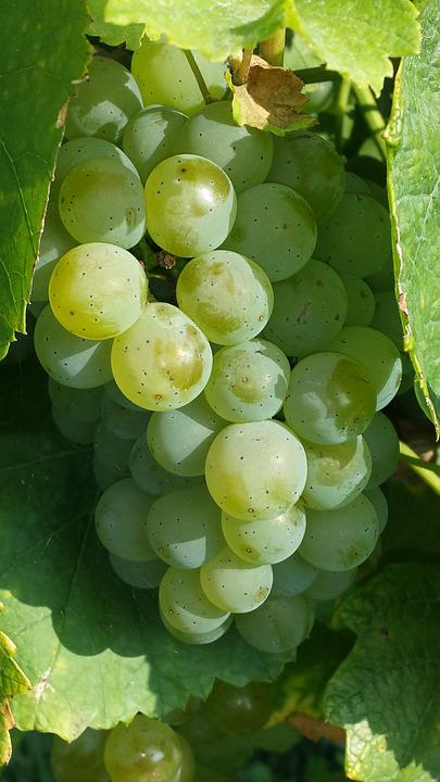 Grapes, Green, Fruit, Food, Winegrowing, Green Grapes