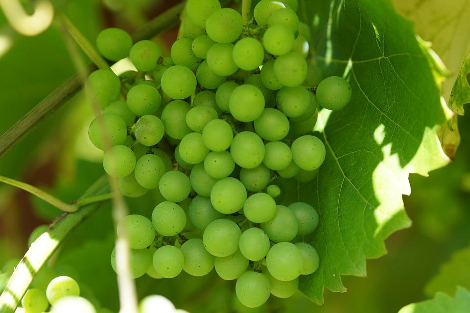Green Grapes, Wine, Winegrowing, Vine, Macro