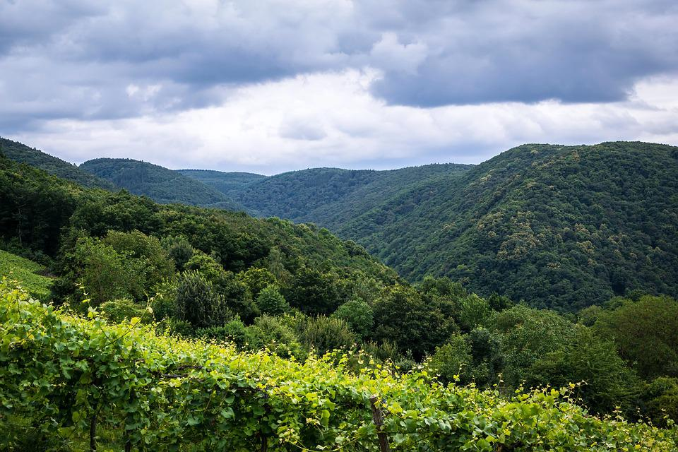 Mountains, Forest, Vineyard, Ahr Valley, Winegrowing