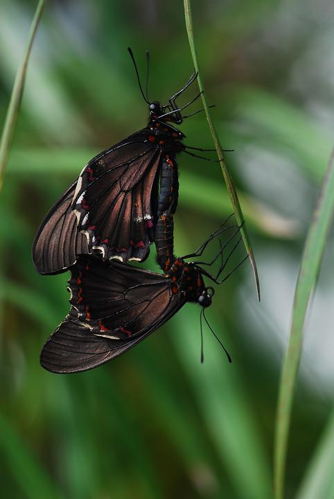 Insect, Nature, Wing, Animal World, Fly, Butterflies