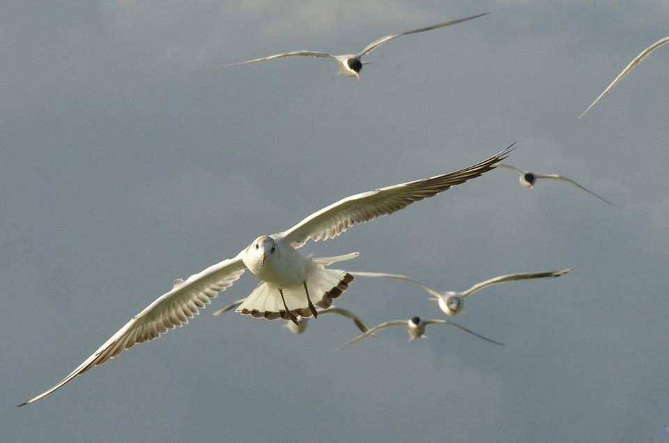 Bird, Seagull, Wing, Fly, Air