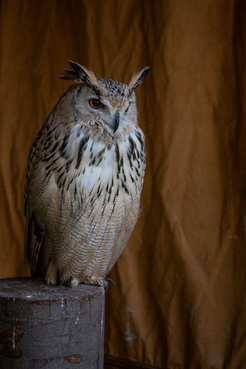 Eagle Owl, Bird, Animal, Feather, Wing, Raptor, Birds