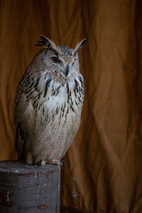Eagle Owl, Bird, Animal, Feather, Wing, Raptor, Birds