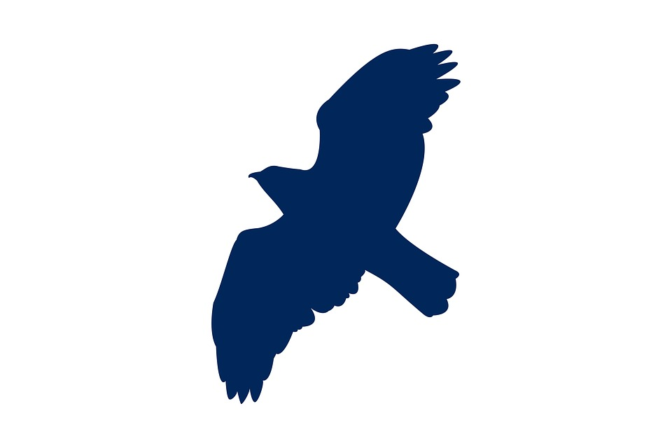 Buzzard, Flying, Bird, Silhouette, Wing, Nature, Cute