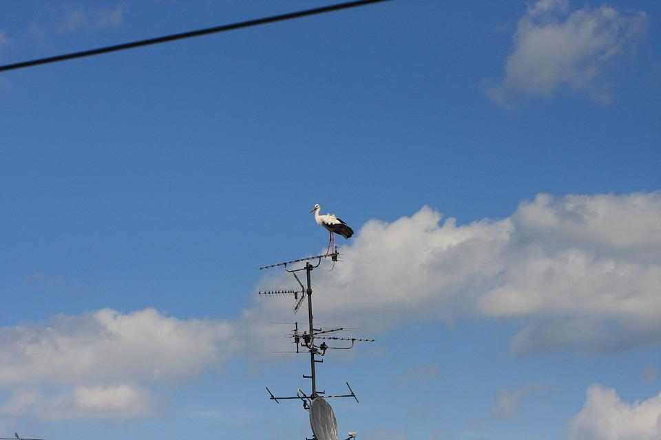 Sky, Bird, Stork, Roof, Fly, Wing, Feather, Summer