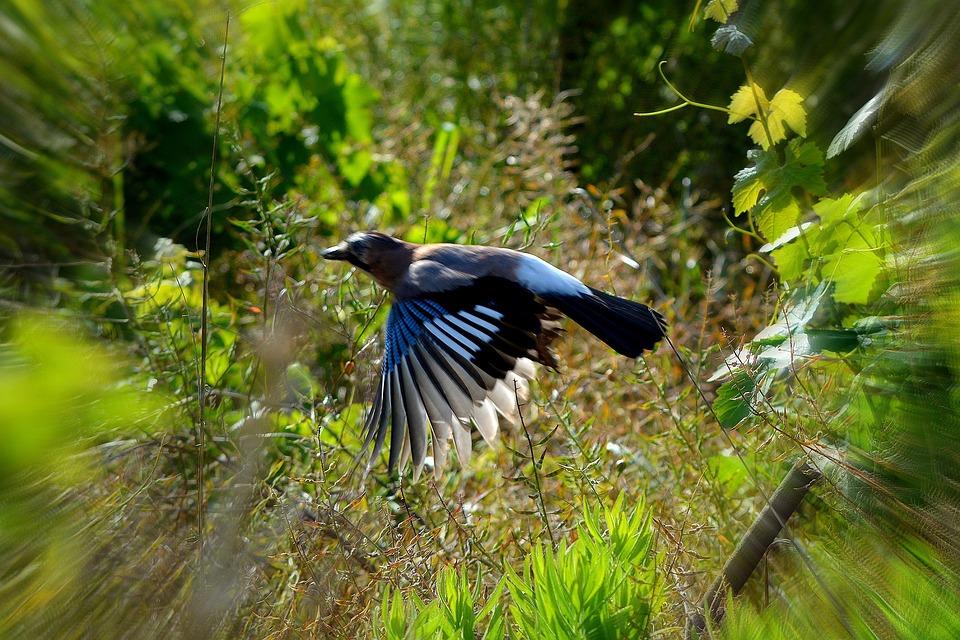 Animal, Bird, Flight, Fly, Fast, Wing