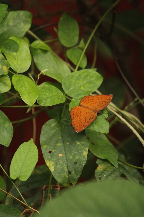 Butterfly, Fly, Wing, Nature, Gold