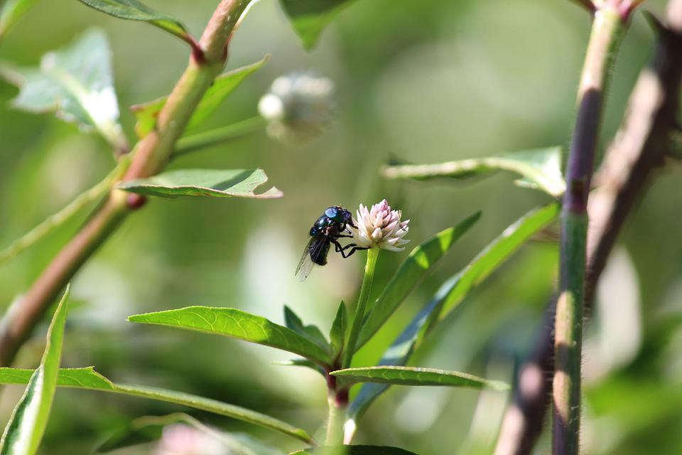 Insect, Nature, Spring, Flower, Beetle, Wing