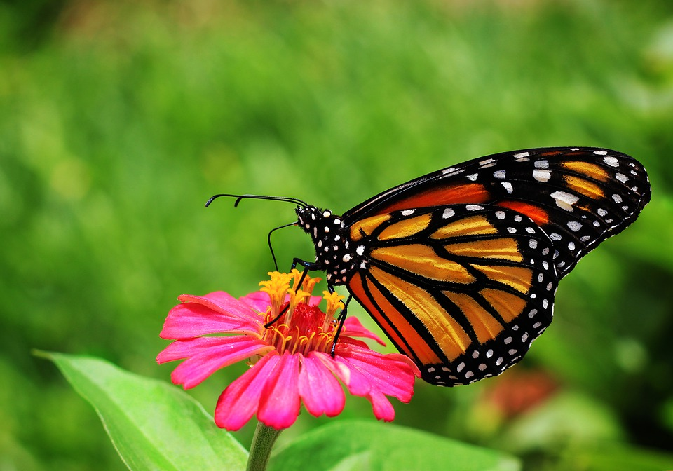 Butterfly, Garden, Flowers, Nature, Insects, Wing
