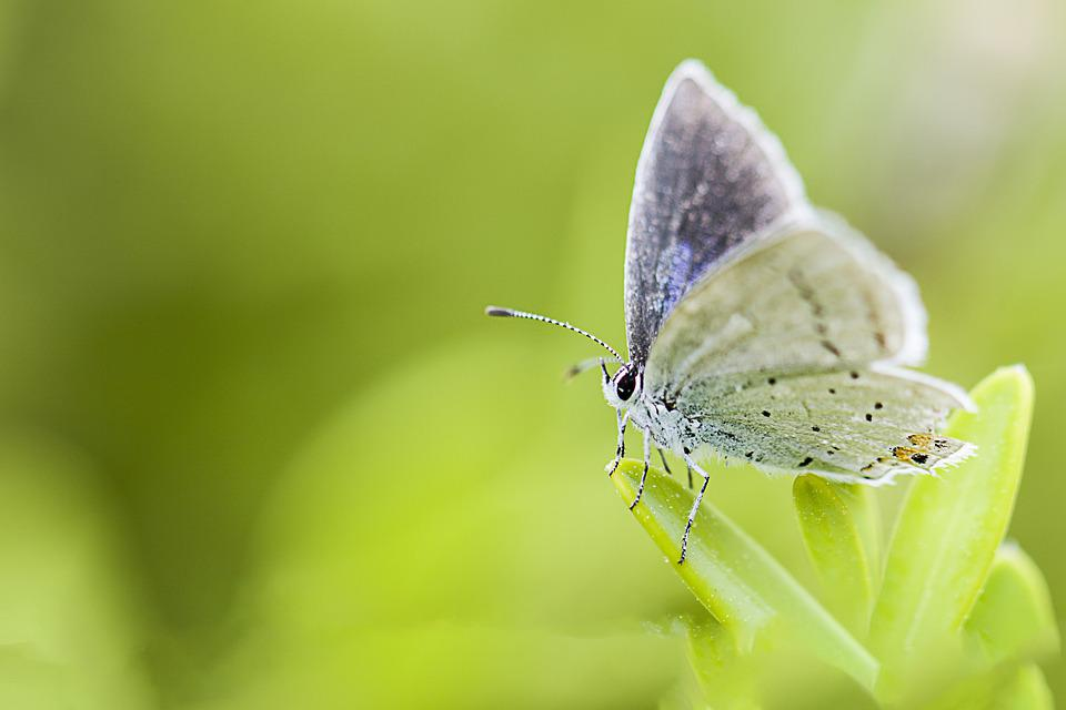 Butterfly, Insects, Nature, Animal, Wing, Macro, Photo