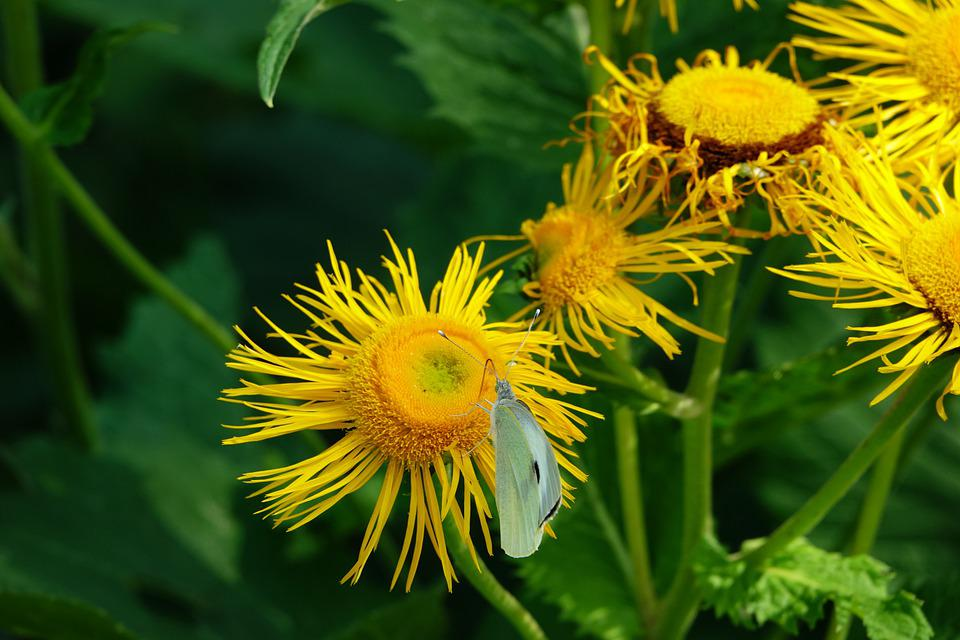 Flower, Butterfly, Botany, Summer, Animal, Macro, Wing
