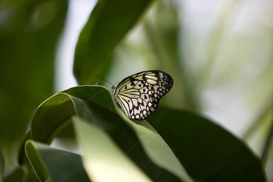 Butterfly, Leaf, Nature, Plant, Wing