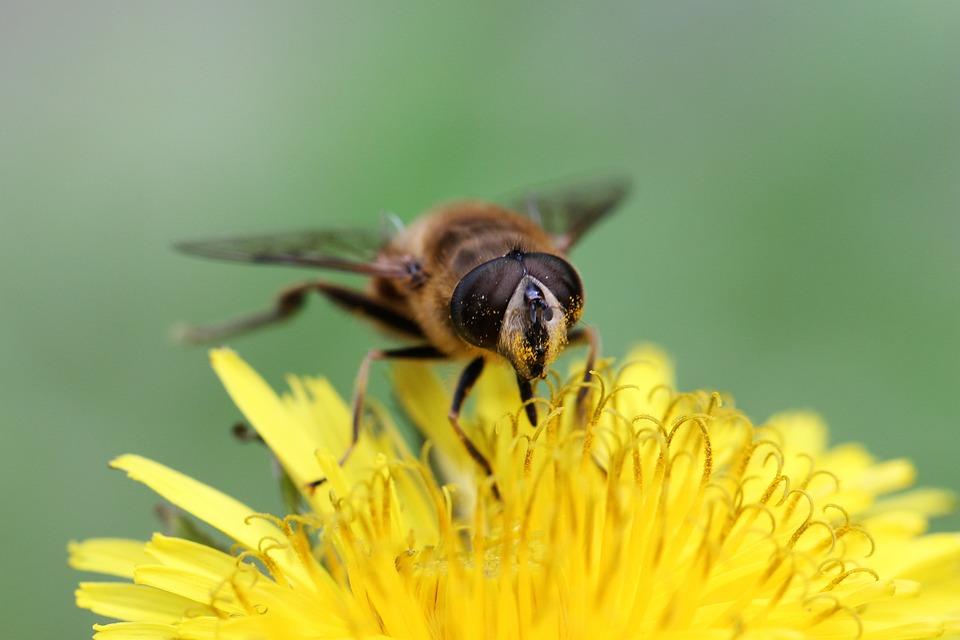 Insect, Nature, Macro, Animal, Bee, Wing, Natural